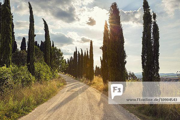 Italien  Toskana  Ponte D´arbia  Treelined dirt road bei Sonnenuntergang