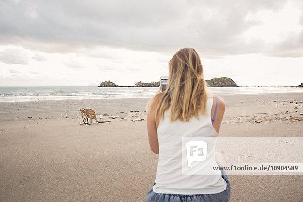 Australien,  Queensland,  Cape Hillsbourgh,  Frau beim Fotografieren von Kangaroo (Macropus) am Strand