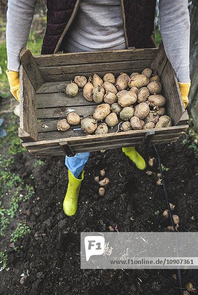 Kartoffeln pflanzen  Holzkiste mit Kartoffeln
