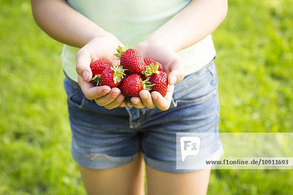 Mädchenhände halten Erdbeeren.