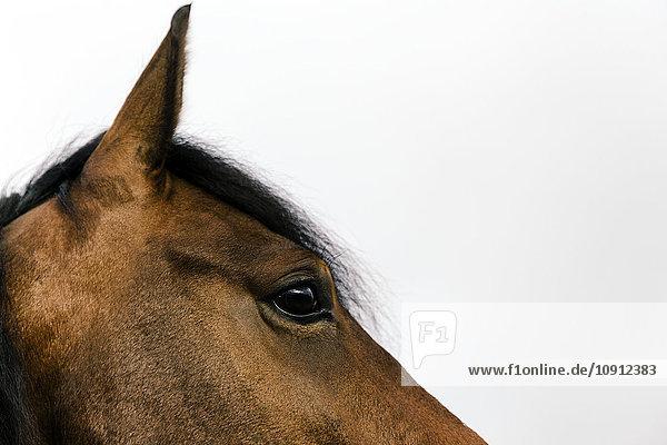 Kopf und Auge eines braunen Pferdes