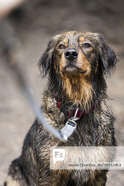 Porträt eines nassen Mischlings