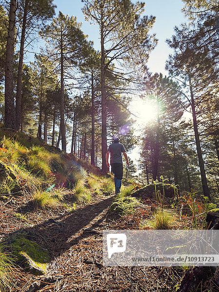 Spanien  Sierra de Gredos  Mann beim Wandern im Wald