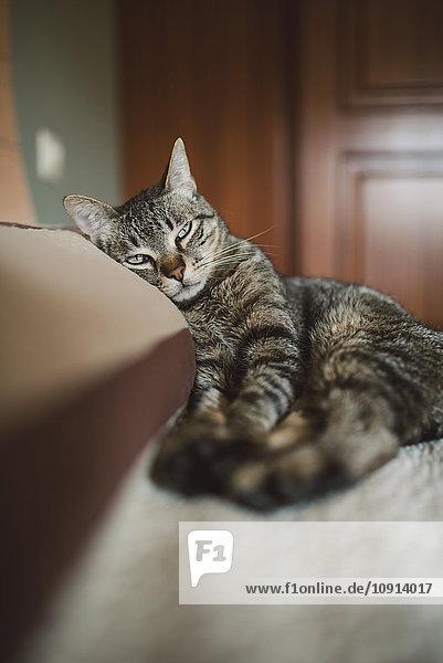 Tabby-Katze auf dem Kissen des Bettes liegend