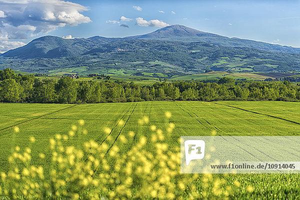 Italien  Toskana  Val d'Orcia  Blick auf Felder und hügelige Landschaft im Frühjahr
