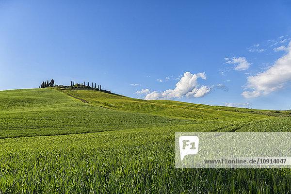 Italien  Toskana  Val d'Orcia  Bauernhaus und Felder im Frühling