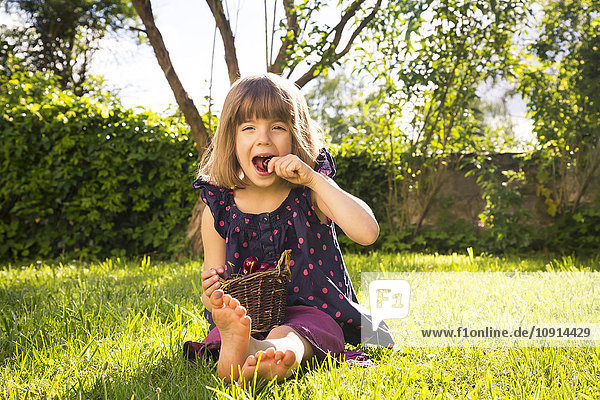Little girl with punnet of cherries sitting on a meadow in the garden