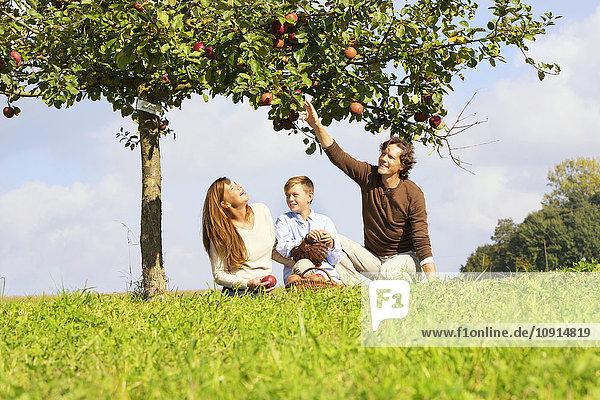 Familie erntet Äpfel auf der ländlichen Wiese