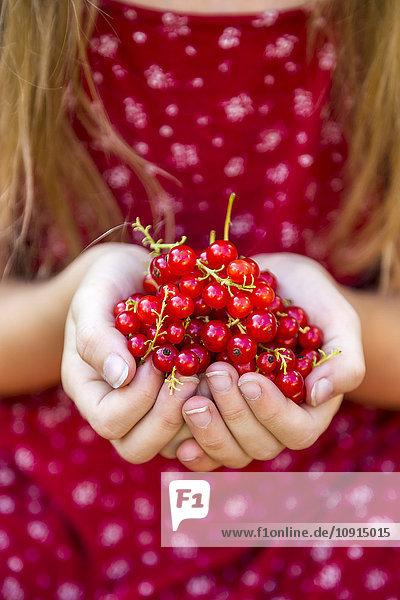 Mädchenhände mit roten Johannisbeeren