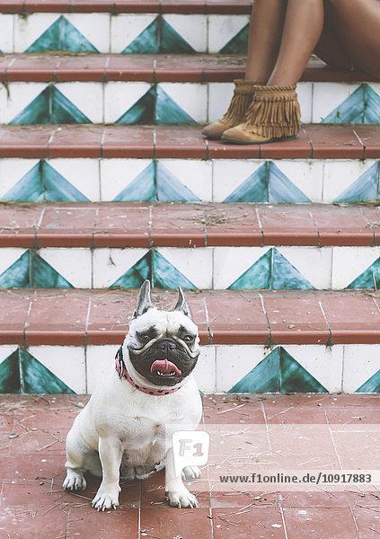 Porträt des Hundes vor der Treppe sitzend Porträt des Hundes vor der Treppe sitzend