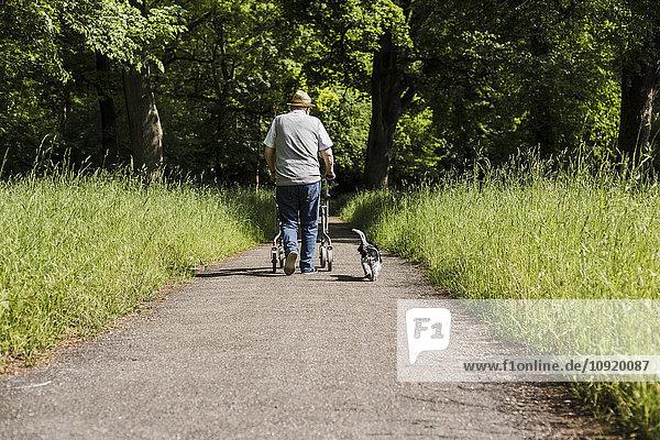 Rückansicht eines älteren Mannes  der mit einem Rollator und seinem Hund in der Natur spazieren geht.