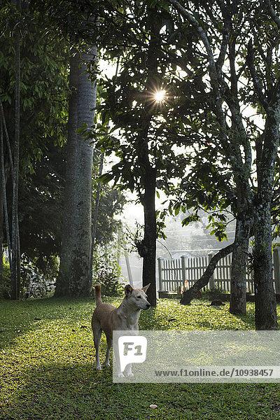 Dog in garden at sunset