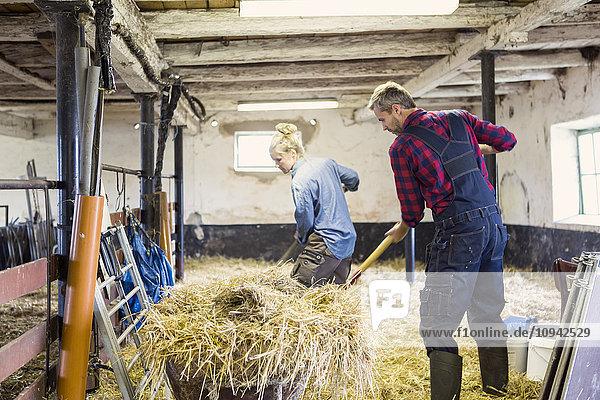 Mann und Frau stehen beim Ausbringen von Heu in der Scheune