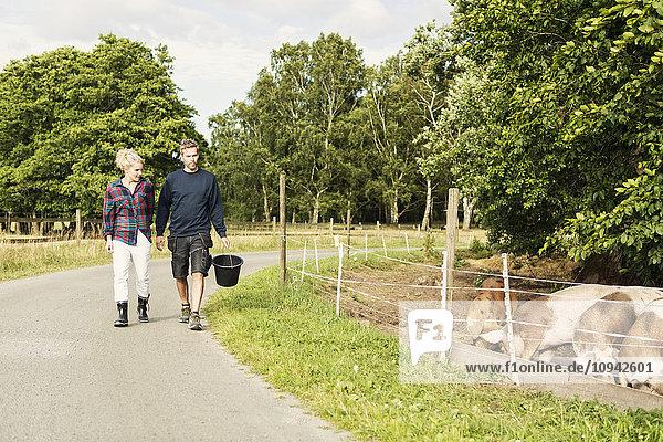 Mann und Frau gehen auf der Straße gegen Bäume durch Schweine auf dem Bauernhof.