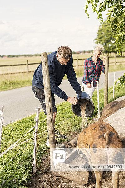 Farmer standing besides woman feeding pigs at farm