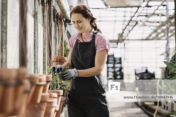 Frau kontrolliert Blätter  die auf Topfpflanzen im Gewächshaus wachsen