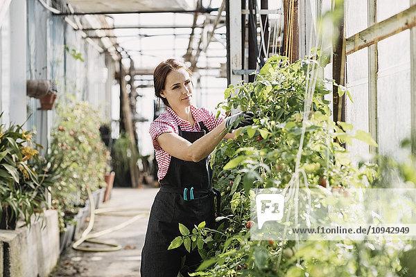 Gärtnerin prüft Pflanzen im Gewächshaus