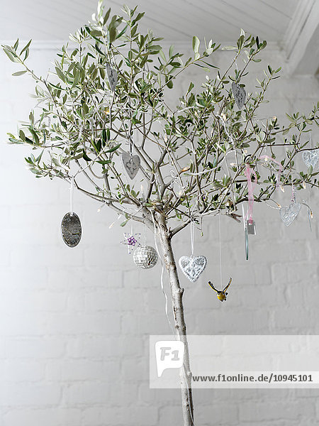 Olive tree with christmas decorations