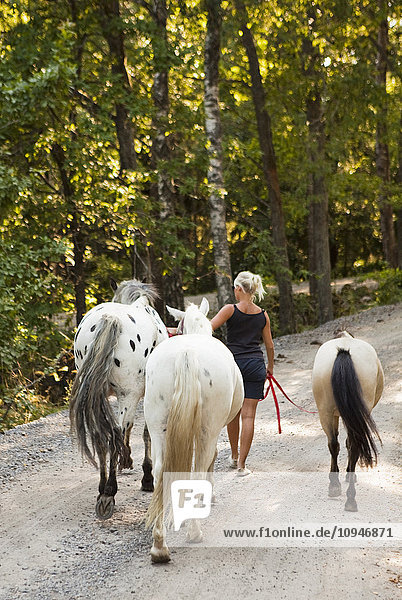 A woman and three horses