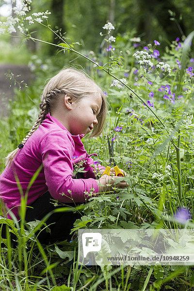 Girl cutting wildflowers