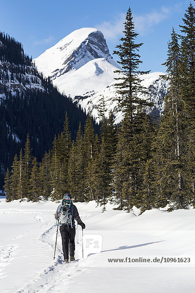 'Female snowshoeing along a snow covered trail with snow covered mountain in the background and blue sky; Banff  Alberta  Canada'