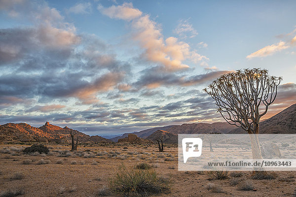 'Sunrise over Richtersveld National Park  Kookerboom trees dot the landscape; South Africa'