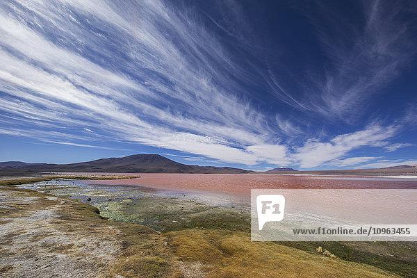 'Laguna Colorada in the Altiplano region; Sur Lipez  Bolivia'