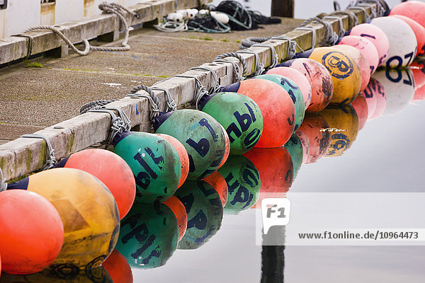 'A row of multicolored buoys tied to a dock in Sand Point Harbor  Southwestern Alaska  USA  Summer '