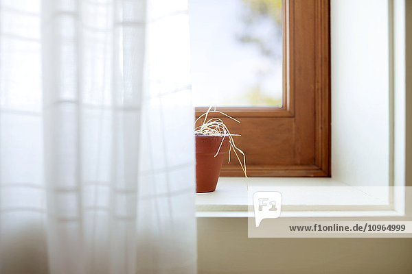 'Small pot of dried flowers on the edge of a window; Quebec  Canada' 'Small pot of dried flowers on the edge of a window; Quebec, Canada'