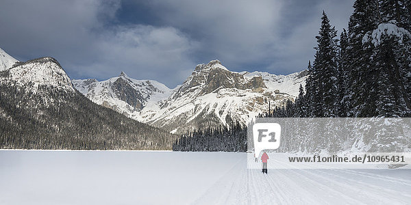 'Cross country skiing in Yoho National Park; Field  British Columbia  Canada'