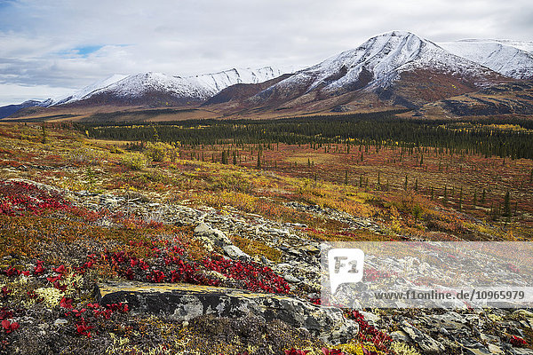 'The landscape along the Dempster Highway is alive with autumn colours; Yukon  Canada'