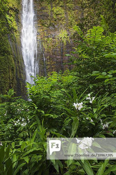'Waimoku Falls with flowers in Haleakala National Park; Kipahulu  Maui  Hawaii  United States of America'