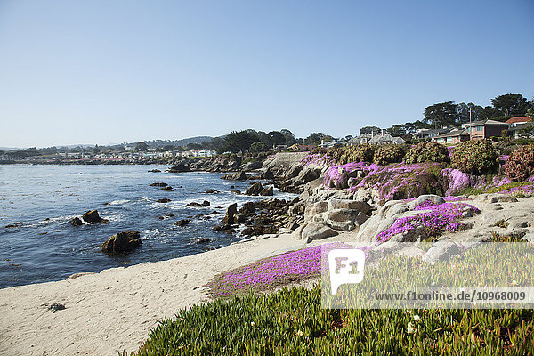 'Houses on the coast of California; Monterey  California  United States of America'