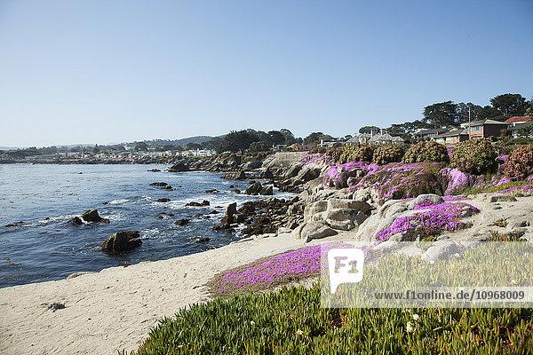 'Houses on the coast of California; Monterey,  California,  United States of America'