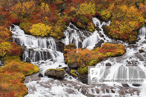'Hraunfossar waterfalls and autumn colours; Iceland'