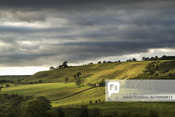 'Green fields on rolling hills under a cloudy sky; Yorkshire Dales  England'