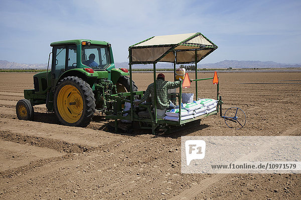 In the Coachella Valley  a tractor and workers seeding a field with Sudangrass  mountains and blue sky in background; Coachella  California  United States of America