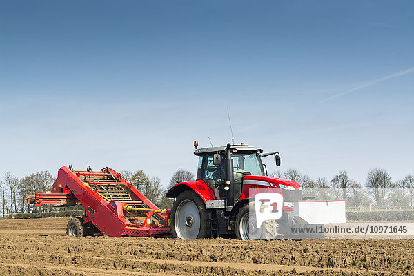 Preparing potato seed bed  using Grimme stone removing machine pulled by a Massey Ferguson 7620; Yorkshire  England