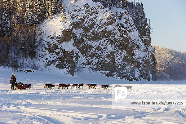 Anna Berington runs on the Yukon River shorlty after leaving the Ruby checkpoint during Iditarod 2015