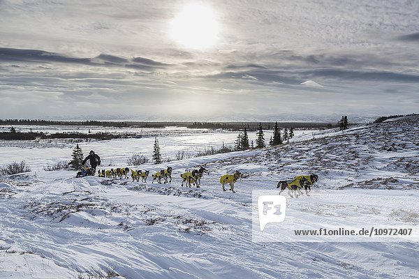 Mats Pettersson of Sweden on the trail in 30 mph wind several miles before the Unalakleet checkpoint during Iditarod 2015