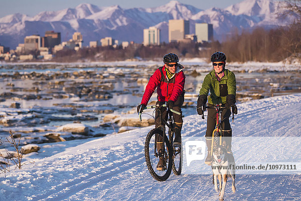 Bicyclists on the Tony Knowles Costal Trail led by an Alaskan Husky with downtown Anchorage in the background  Southcentral Alaska  USA  Winter