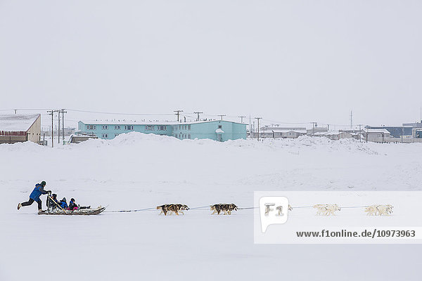 Elementary school children ride a sled pulled by sled dogs around the lagoon  Barrow  North Slope  Arctic Alaska  USA  Winter