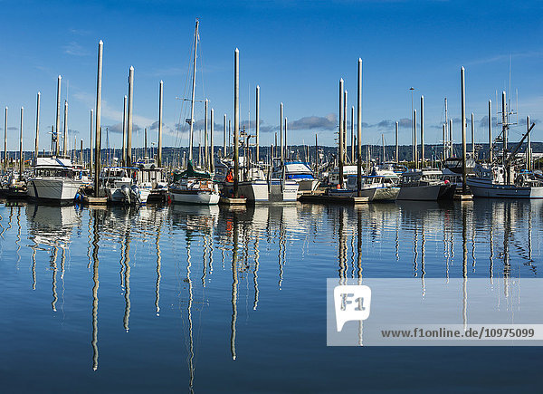 Boats reflecting in the water in the small boat harbor in Homer  Kenai Peninsula  Southcentral Alaska  summer