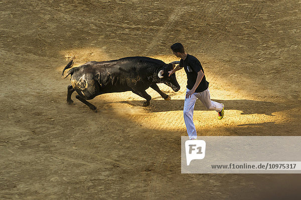 'A young man running with a bull in a bullring; Alcala de Henares  Madrid  Spain'
