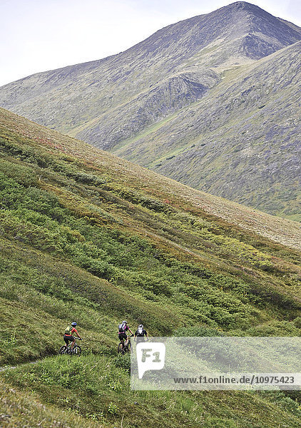 Mountain bikers on the Devils Pass Trail in the Chugach National Forest  Kenai Peninsula  Southcentral Alaska
