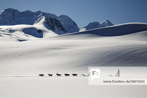 Summer tourists on dog sledding tour on Colony Glacier in the Chugach Mountains  Southcentral Alaska  summer