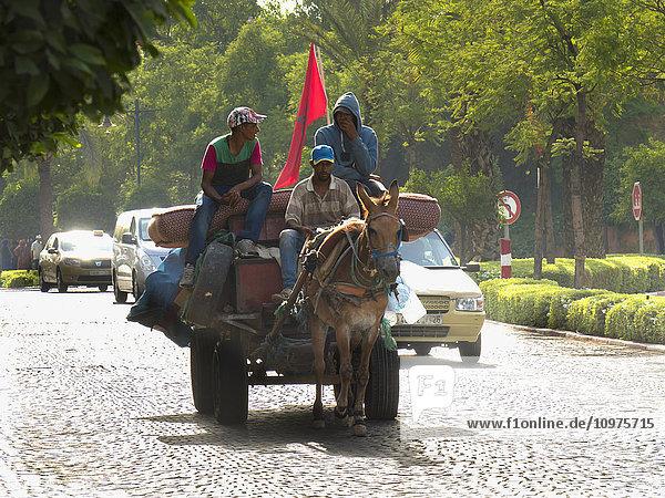 'Men riding a horse drawn cart down the street beside cars; Marrakech  Morocco'