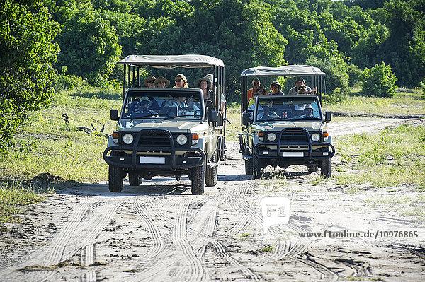 'Safari vehicles  Chobe National Park; Kasane  Botswana'