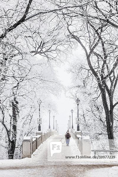 'Walking a dog over footbridge on a frosty winter day in Assiniboine Park; Winnipeg  Manitoba  Canada'