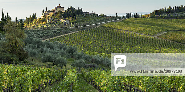 'Lush vineyards on a hilly landscape; Gaiole in Chianti  Toscana  Italy'